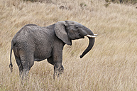 Kenya, Rift Valley, Maasai Mara National Reserve - CB000177
