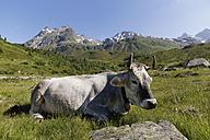 Austria, Vorarlberg, Montafon, Cow sitting on eadow, Lobspitzen mountains in backbround - SIEF005049