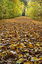 Germany, Bavaria, Aschheim, alley covered with autumn leaves - AXF000622
