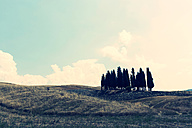 Italy, Tuscany, San Quirico d'Orcia, landscape with group of cypresses - PAF000338