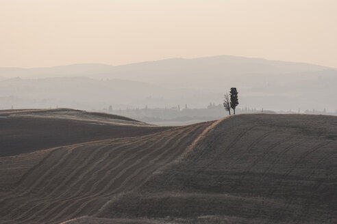 Italy, Tuscany, San Quirico d'Orcia, landscape with two cypresses - PAF000340