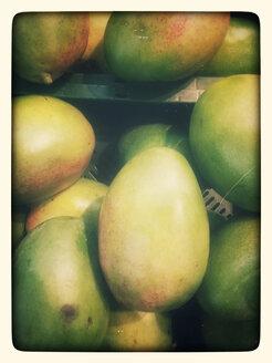 Mangoes (Mangifera indica), Supermarket, Germany - CSF020834