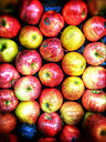 Royal Gala apples (Malus), Supermarket, Germany - CS020827