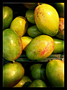 Mangoes (Mangifera indica), Supermarket, Germany - CSF020841