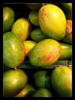 Mangoes (Mangifera indica), Supermarket, Germany - CSF020841