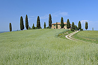 Italy, Tuscany, Siena Province, Val d'Orcia, Pienza, view to dirt road through fields with farmhouse and cypress trees - RUEF001193
