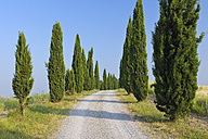 Italy, Tuscany, Siena Province, Crete Senesi, view to Italy, Tuscany, Siena Province, Crete Senesi, view to cypress-lined dirt road - RUEF001194
