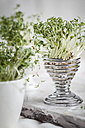 Cress (Lepidum sativum) in eggcup and cups - SBDF000577