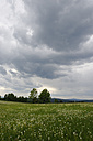 Germany, Bavaria, Neuschoenau, dark clouds over the meadows near National park centre Lusen, Bavarian Forest National Park - LB000553