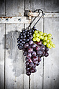 Different red and white grapes hanging on hook in front of grey wooden wall - MAEF007861