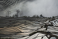 China, Yunnan, Yuanyang, Overcast rice terraces - JBA000092