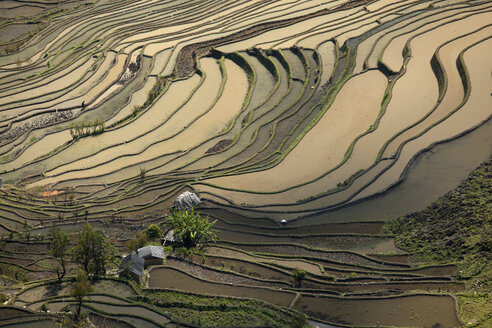 China, Yunnan, Yuanyang, Farmer ploughing in rice terraces - JBA000101