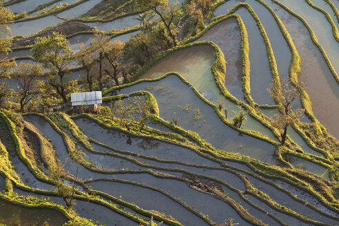 China, Yunnan, Yuanyang, Woman walking in rice terraces - JBA000104
