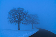Germany, country road and silhouettes of two bare trees in blue winter landscape - TCF003911