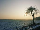 Winter, Saxony, Germany, Landscape, Tree, Winter sun - MJF000875