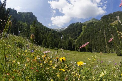 Austria, Vorarlberg, Raetikon, Stueberfall, Nenzing, alp 'Nenzinger Himmel', valley Gamperdonatal - SIEF005055