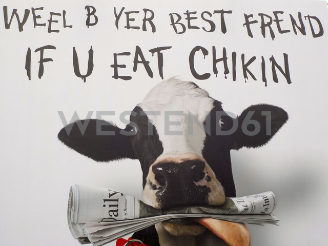 USA, Denver, cow with newspaper, saying - DJG000047