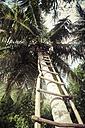 Seychelles, La Digue, palm tree and self-built ladder at beach - KRPF000305