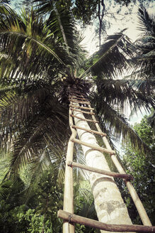 Seychelles, La Digue, palm tree and self-built ladder at beach - KRPF000305