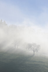 Germany, Baden-Wuerttemberg, Black Forest, fruit trees befogged - LAF000602