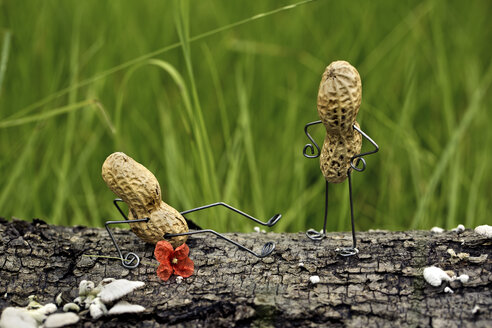 Angry peanut man pushing his competitor to the ground - NIF000003