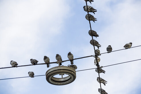 Pigeons sitting on power lines, viem from above - EJWF000323