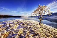 Great Britain, Scotland, Altnaharra, Loch, hoarfrost, snow and tree - SMAF000189