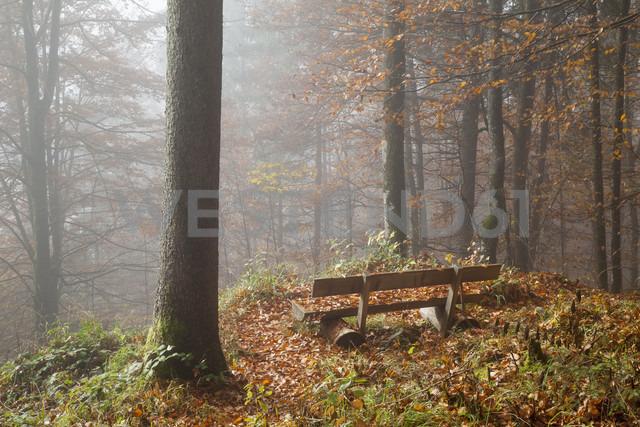 Germany, Bavaria, Upper Bavaria, Berchtesgadener Land, Berchtesgaden National Park, Schoenau at Koenigssee, bench at autumnal wood - WIF000389