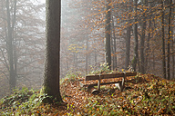 Germany, Bavaria, Upper Bavaria, Berchtesgadener Land, Berchtesgaden National Park, Schoenau at Koenigssee, bench at autumnal wood - WIF000389