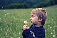 Little boy with blowball - PA000427