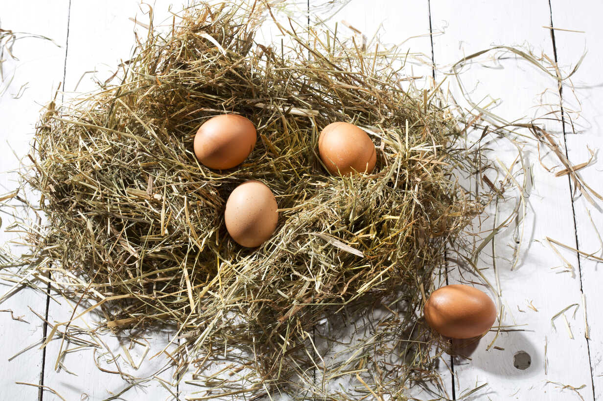 Easter nest and four brown eggs on white wooden table - MAEF007946 - Roman Märzinger/Westend61