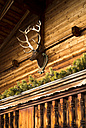 Austria, Tyrol, Alpbach, Wooden house with deer head - TKF000280