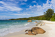 Seychelles, Praslin, tourists with dogs at beach Anse Lazio - WE000021
