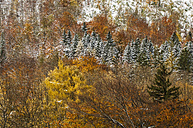 Austria, Styria, forest in autumn at Koppenpass - HHF004736
