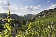 Germany, Rhineland-Palatinate, Vineyards at Nahe valley near Schlossboeckelheim - CSF020924