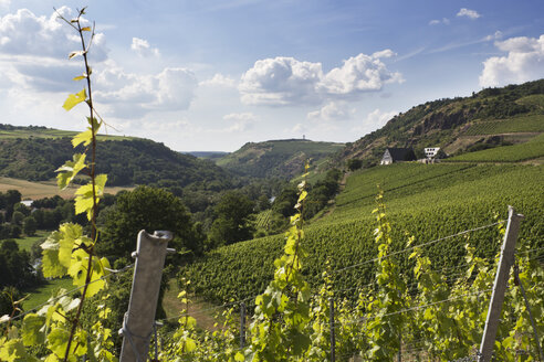 Germany, Rhineland-Palatinate, Vineyards at Nahe valley near Schlossboeckelheim - CSF020924