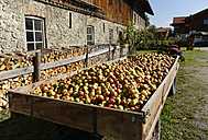 Germany, Bad Feilnbach, Apples on trailer - SIEF005111