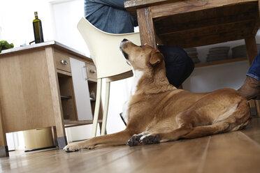 Dog looking up at man sitting at table - FMKF001105