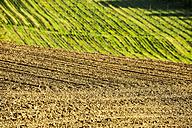 Austria, Styria, Western Styria, Deutschlandsberg, field in spring, grapevines in the background - HHF004745