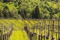 Austria, Styria, Western Styria, Deutschlandsberg, view to grapevines - HHF004742