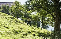 Austria, Salzburg State, Flachau, Senior farmer in summer meadow - HHF004764