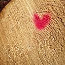 Heart on felled tree, marking - GSF000770
