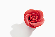 Red marzipan blossom on white background - CSF020990