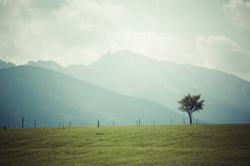 Germany, Bavaria, Bavarian Prealps, Allgaeu, Halblech near Schongau, meadow and single tree in front of mountains and cloudy sky - MABF000217