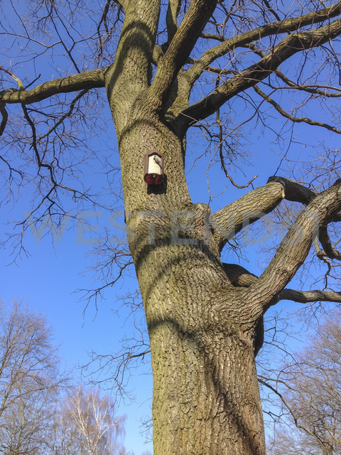 bird at birdcage, tree, Tiergarten, Berlin, Germany - FBF000252
