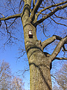 bird at birdcage, tree, Tiergarten, Berlin, Germany - FBF000252