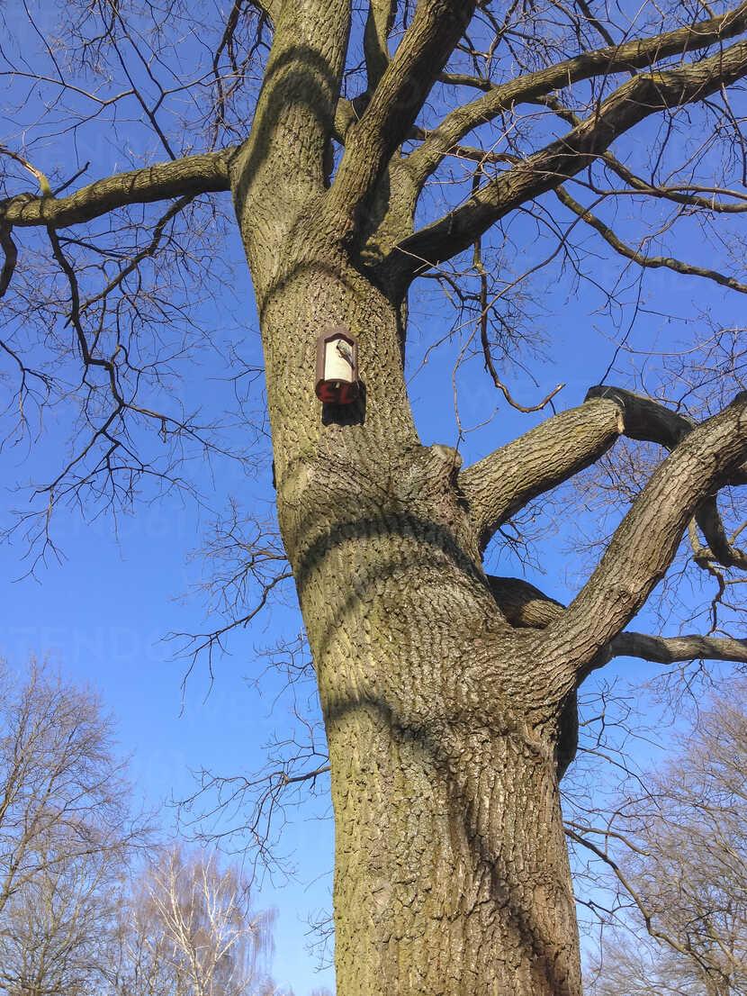 bird at birdcage, tree, Tiergarten, Berlin, Germany - FBF000252 - Frank Blum/Westend61