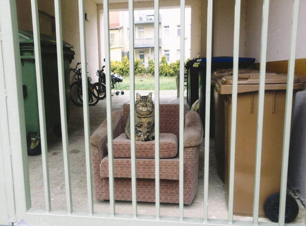 Cat sitting on armchair on courtyard - HC000008