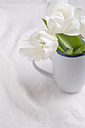 White Tulips (Tulipa) in a cup - MYF000224