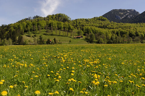 Germany, Bavaria, Spring at Hammer in the Leitzach valley near Bayerischzell - LB000685